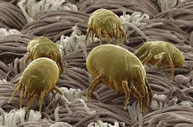 pic-mites-allergic-common-hiding-places-02